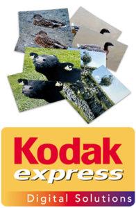 print - process - kodak - studio 5